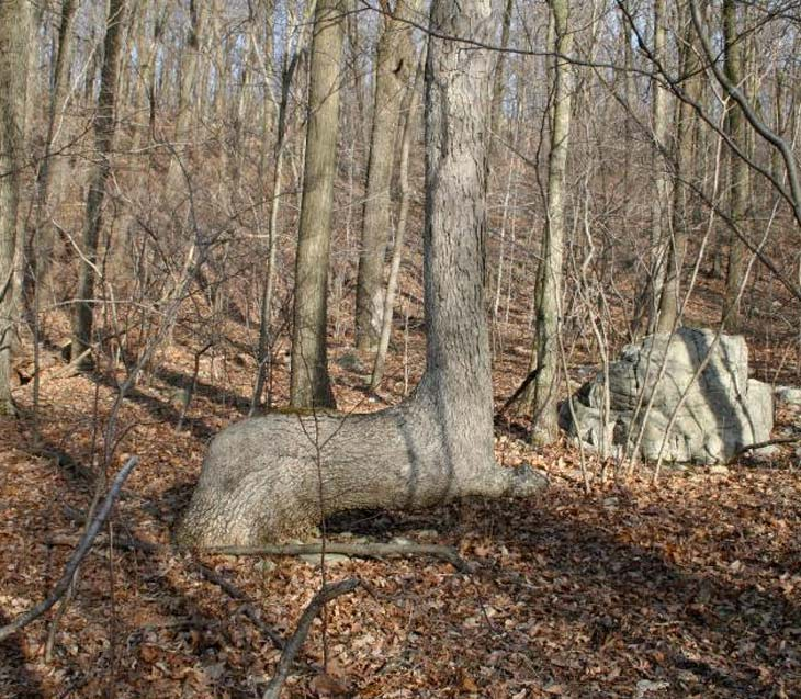 You Should Know What Bent Trees In Nature Really Means
